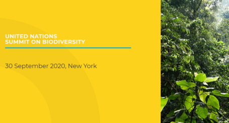United Nations Summit on Biodiversity 2020